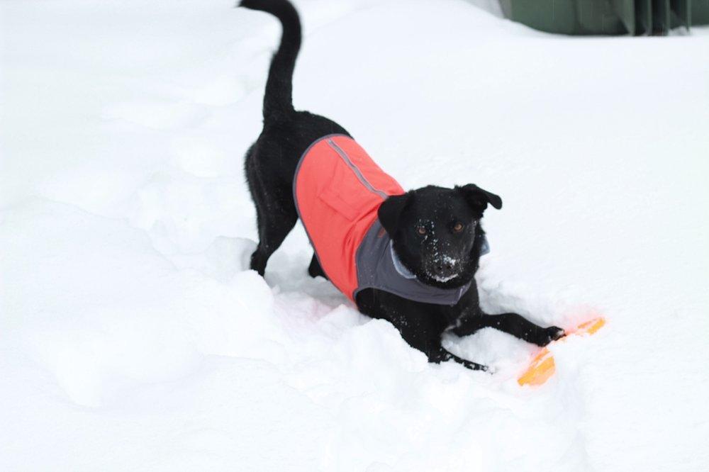 snowdogutilityvestplaying