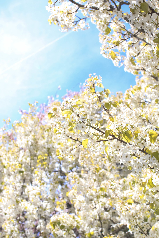 springflowersblogger