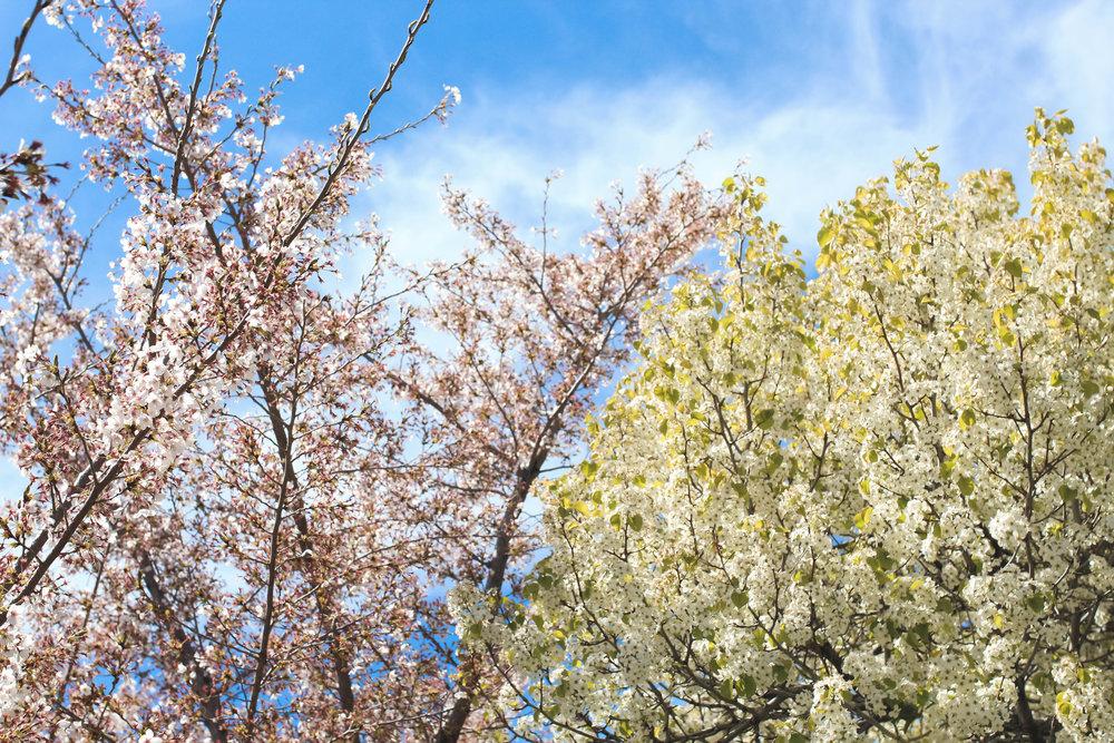 springflowersblossomsblogger
