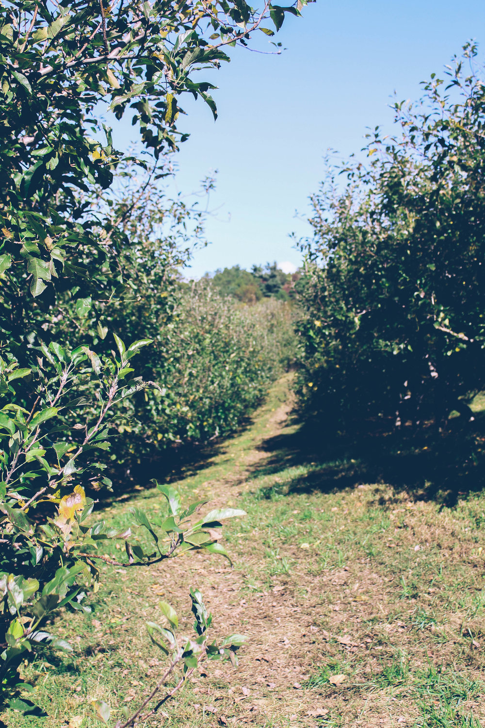appleorchardnorthcarolina