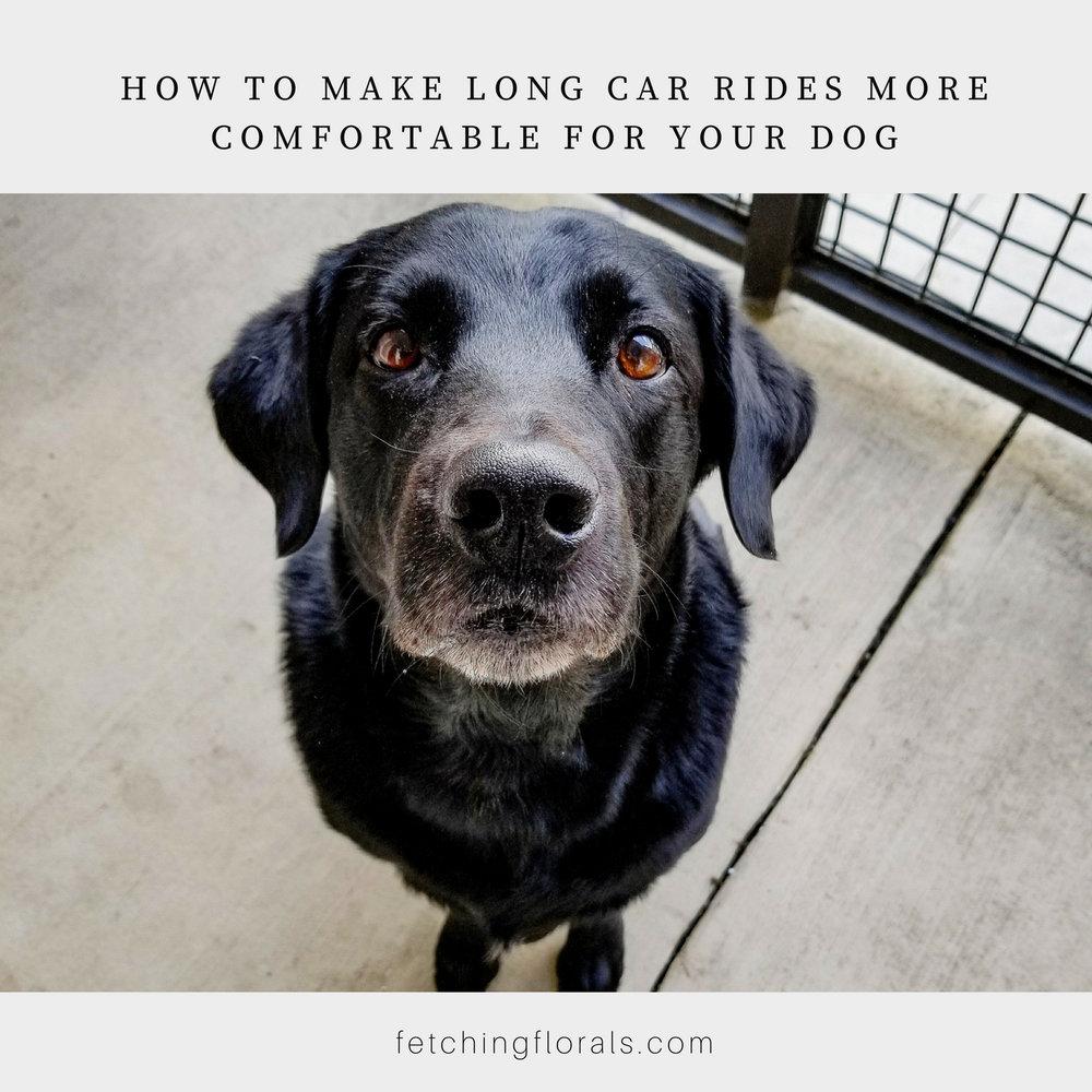 car ridescomfortabledogscarsick