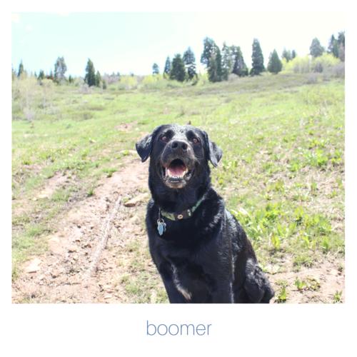 boomerfetchingfloralsdog