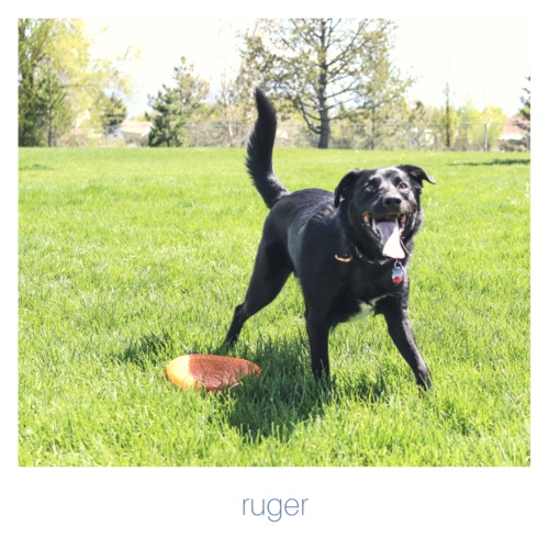 rugerfetchingfloralsdog