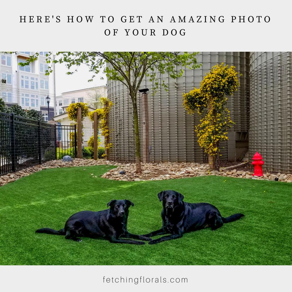 amazingphotophotographydogpet
