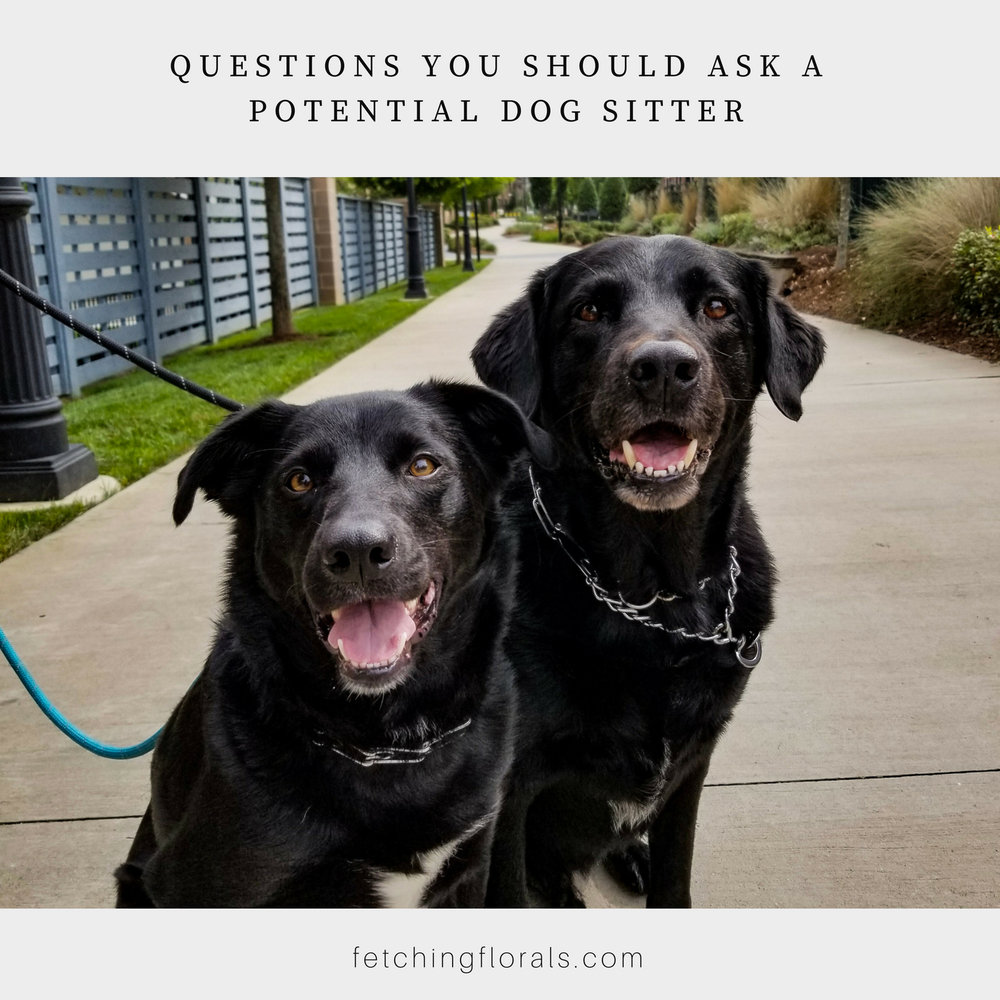 questionspotentialdogsitterdogdaycare