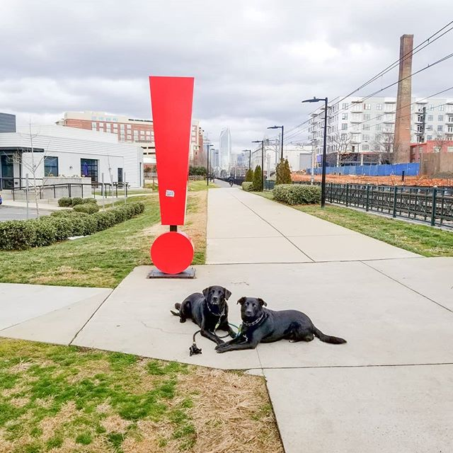 Just a couple of good boys living the city life!