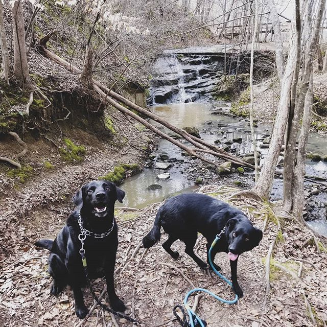 They saw their first waterfall AND horse today! 🐎🐶🌞