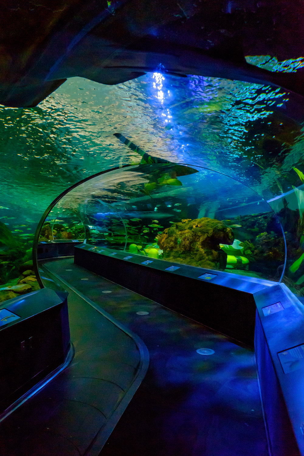 Ripley's Aquarium of Toronto