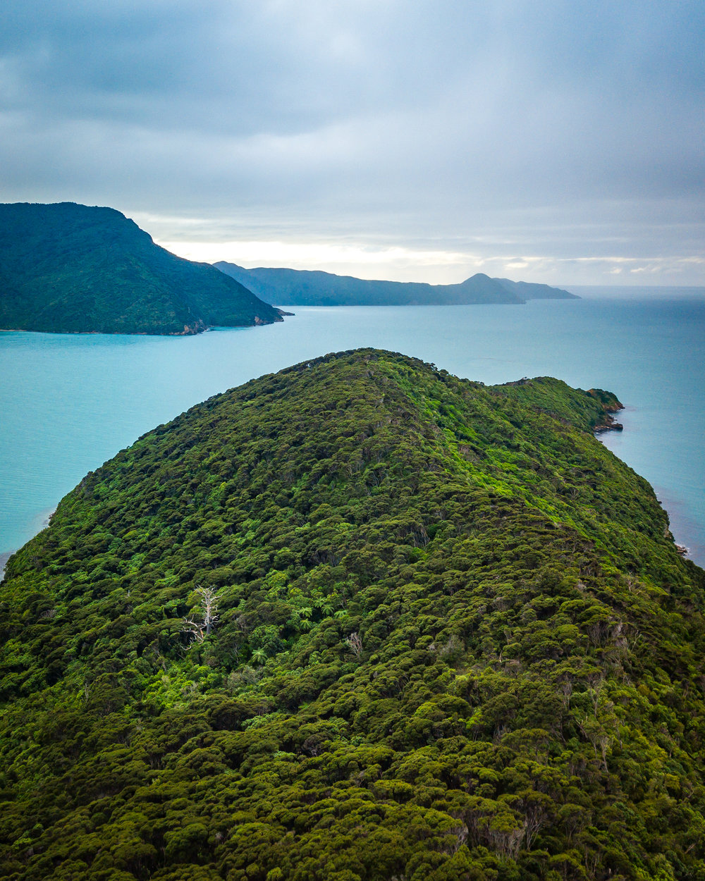 Motuara Island - Marlborough, New Zealand