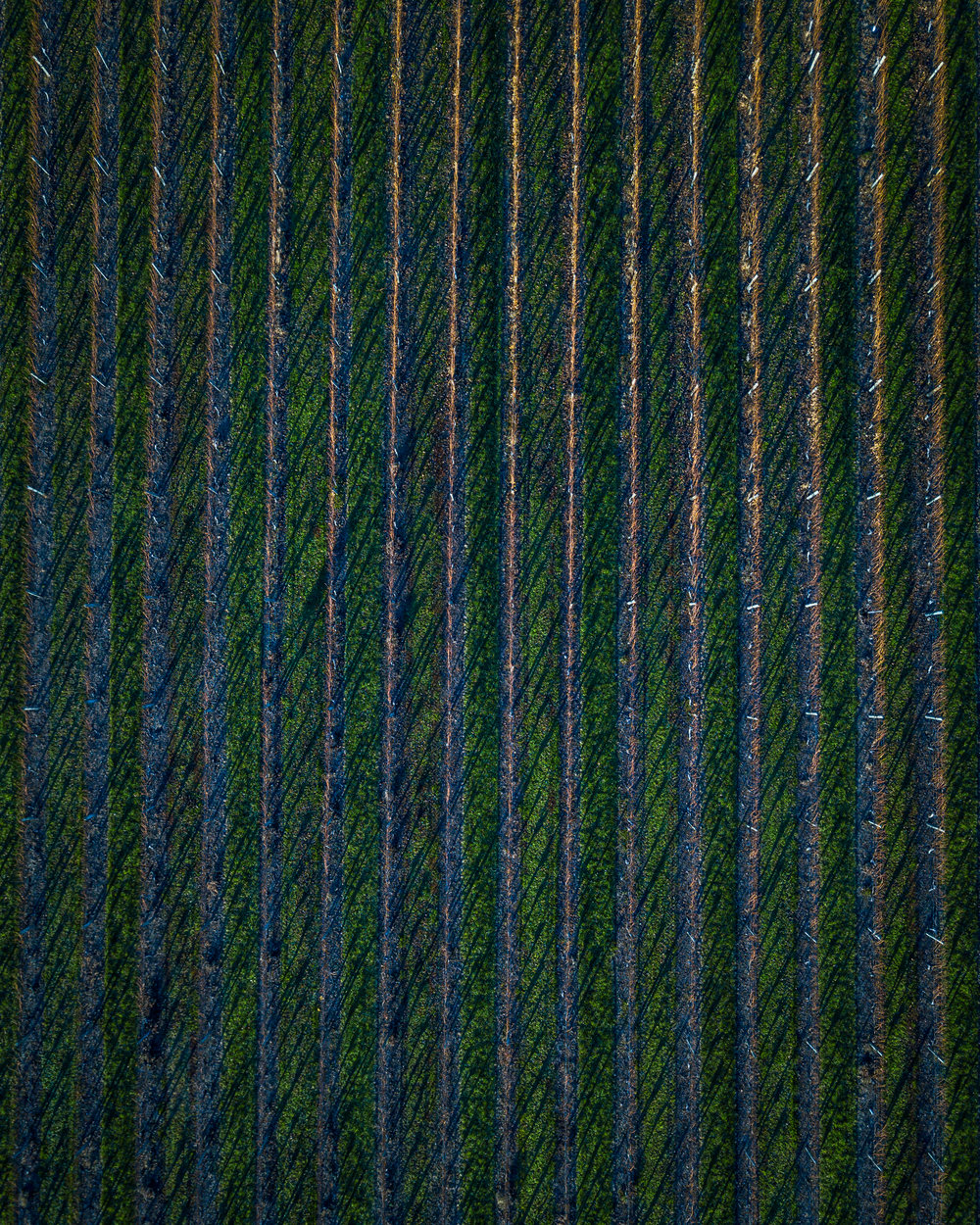Vineyards from above