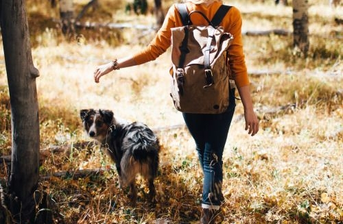 BEST HIKING TIPS FOR YOU AND YOUR DOG. -