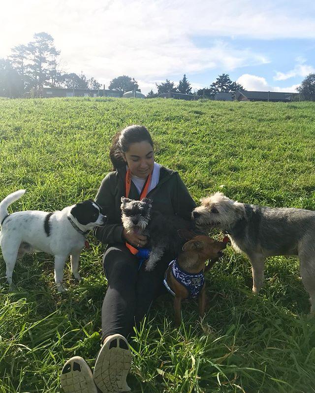Cuddles 💕💕💕 - - - #auckland #dogwalker #newzealand #dogsofnewzealand #doggiedaycare #daycare #nzdog #nzdogs #nzdogsoninstagram #aucklanddogs #dogsofnz  #dogsofauckland #doglover #instadog #dogoftheday #dog #dogs #dogstagram #westauckland #aucklandcity #dogwalking #4leggedfun #adventure #aucklanddogwalker #specialisedinsmallpackwalks #individualoneononewalks #bushwalks #beachwalks