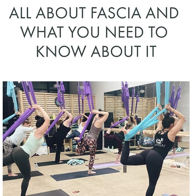 Have you ever heard your yin or aerial yoga instructor talk about fascia and wondered what they were talking about? If so, you are not alone. 💙  In hopes of elaborating on this topic, @jendoesaerial of @atherialfitness wrote a blog post for us discussing fascia tissue and how it relates to mobility and flexibility 🤸🏽‍♀️ Basically, fascia is a connective tissue that's spread throughout the whole body (like the white part of an orange). When we practice aerial yoga, for example, the fabric/hammock works its way into the fascia by massaging through the soft tissue and into the underlying fascia. Let's be real - this process can be uncomfortable especially when you first start practicing aerial yoga, but it does become easier over time. When we open our fascia, we become more mobile and we help our bodies to hydrate more efficiently.💦💦 For the entire article, check out the link in our bio. • • Thank you, @jendoesaerial, for another great article! 😘