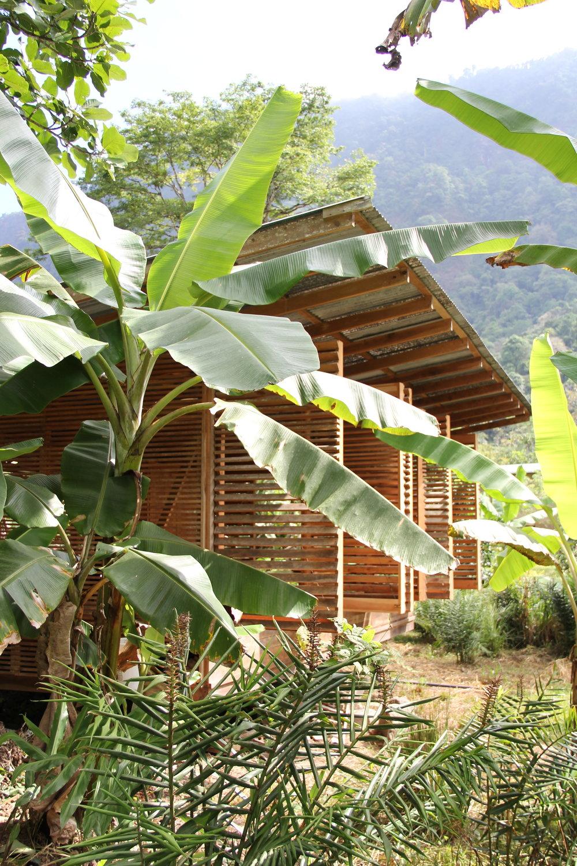 Jungle Blind_ & bananas