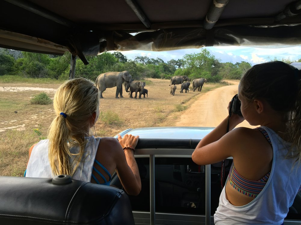 So lucky to have this up-close encounter with a dozen female elephants on our safari drive in Yala National Park in Sri Lanka. It was so exciting to see these gentle giants roaming free on the over 240,000 acres the park provides. Fortunately for us, these elephants were in no hurry, which allowed us to spend 30 minutes with them right in front of our 4x4 vehicle.