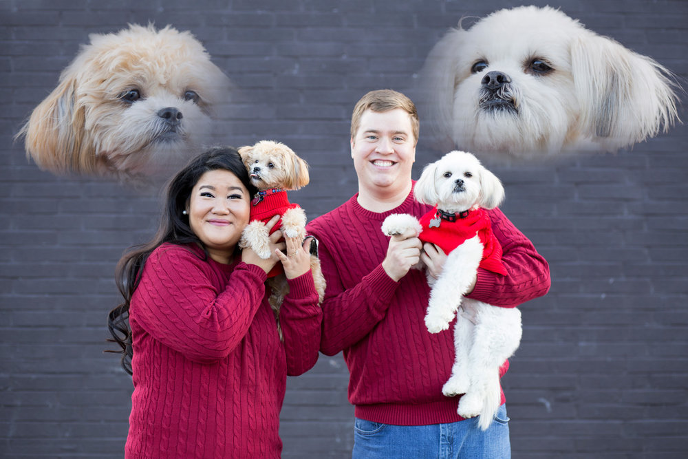 """And here's the """"Awkward Family Picture"""" with the dogs. Such a beautiful, fun family!"""