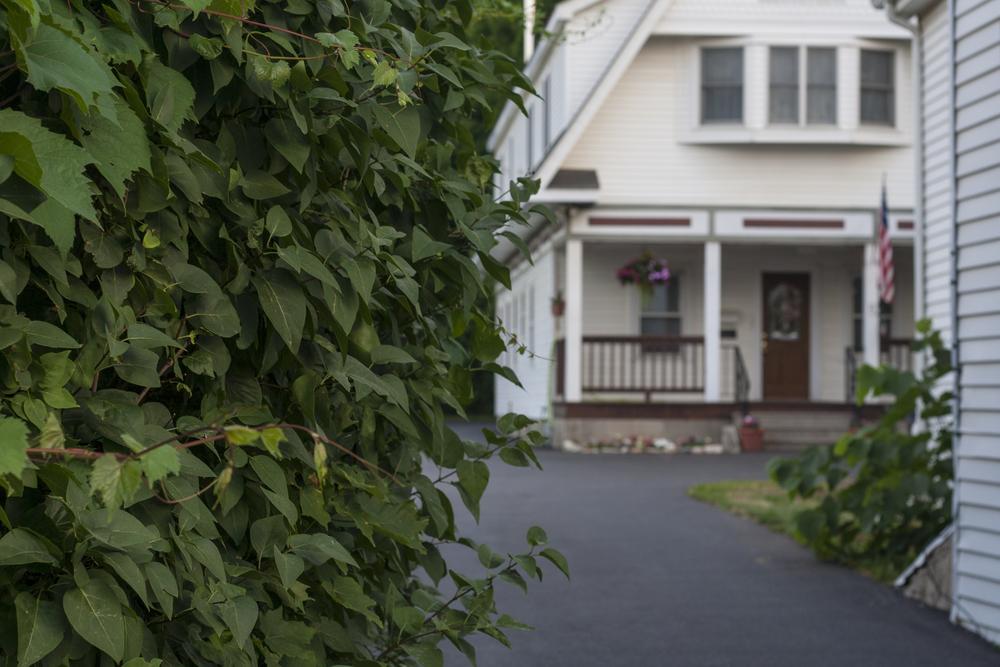 housebush.jpg