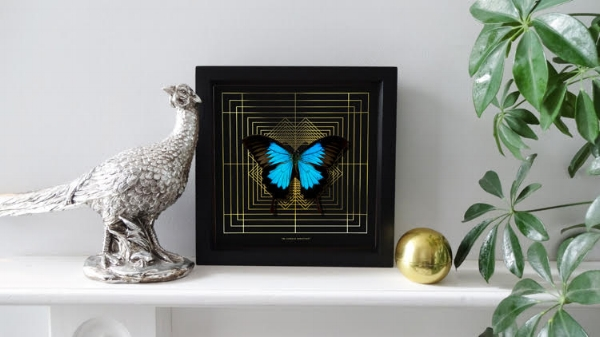 Totally gorgeous butterfly prints.