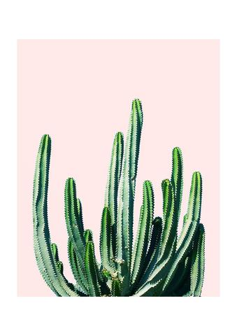 Cactus print at Violet & Thistle £19.95