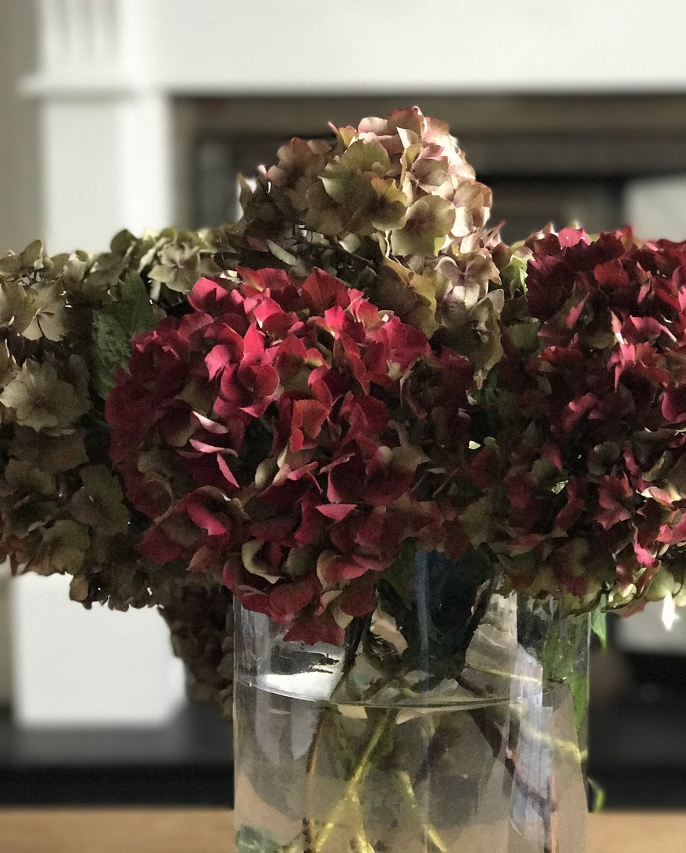 Gorgeous Hydrangeas given to me at the EKBB Awards this week.