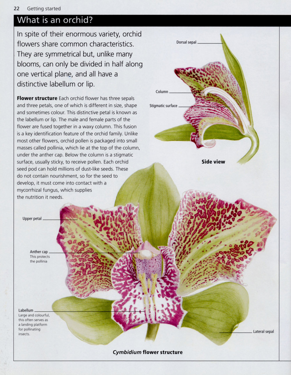 RHS Orchids. Simple Steps to Success  Published by Dorling Kindersley
