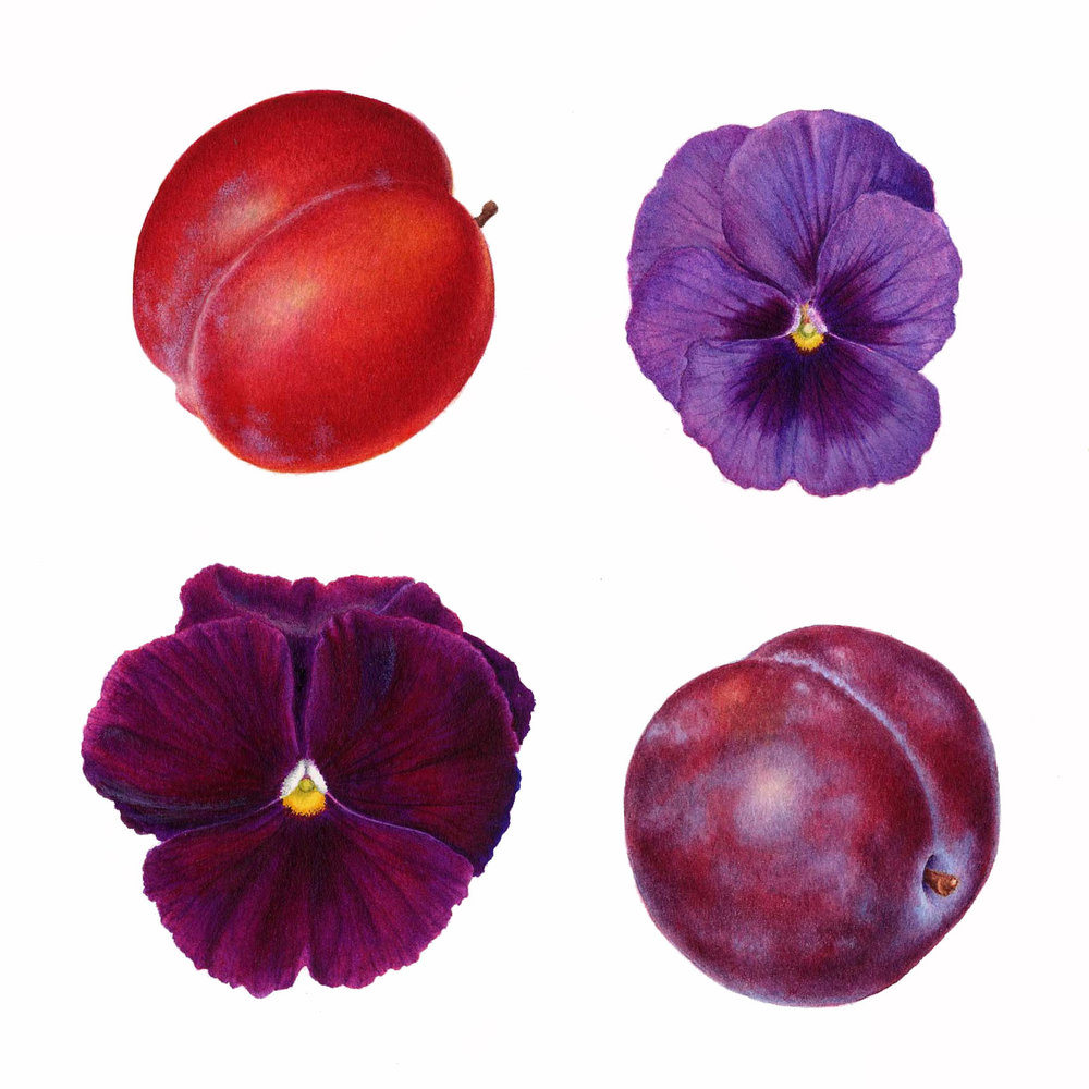 Plums & Pansies