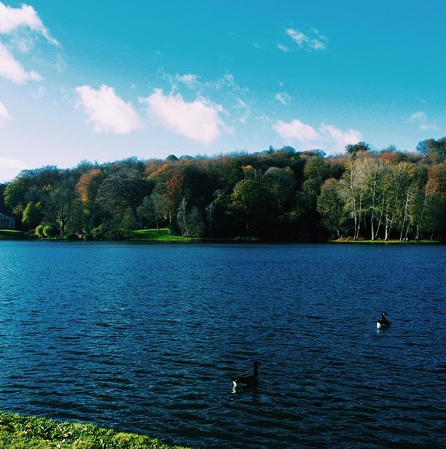 Photo-a-day #21 - Beaut views across the lake • • • #stourhead #nationaltrust #lake #winter #walks #water #ducks #nature #ipreview @preview.app