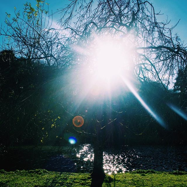 Photo-a-day #20 - A blinding sun on a perfect winters day • • • #photoaday #winter #sun #stourhead #nationaltrust #wiltshire #home #walks #ipreview @preview.app