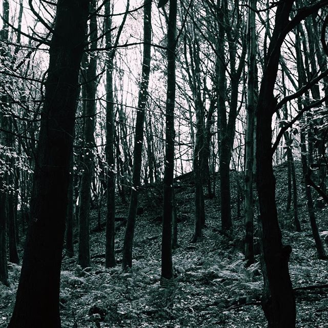 Photo-a-day #16 - The trees at Stourhead looking particularly eerie with no leaves and through the winter clouds • • • #photoaday #stourhead #trees #blackandwhite #winter #nationaltrust #ipreview @preview.app
