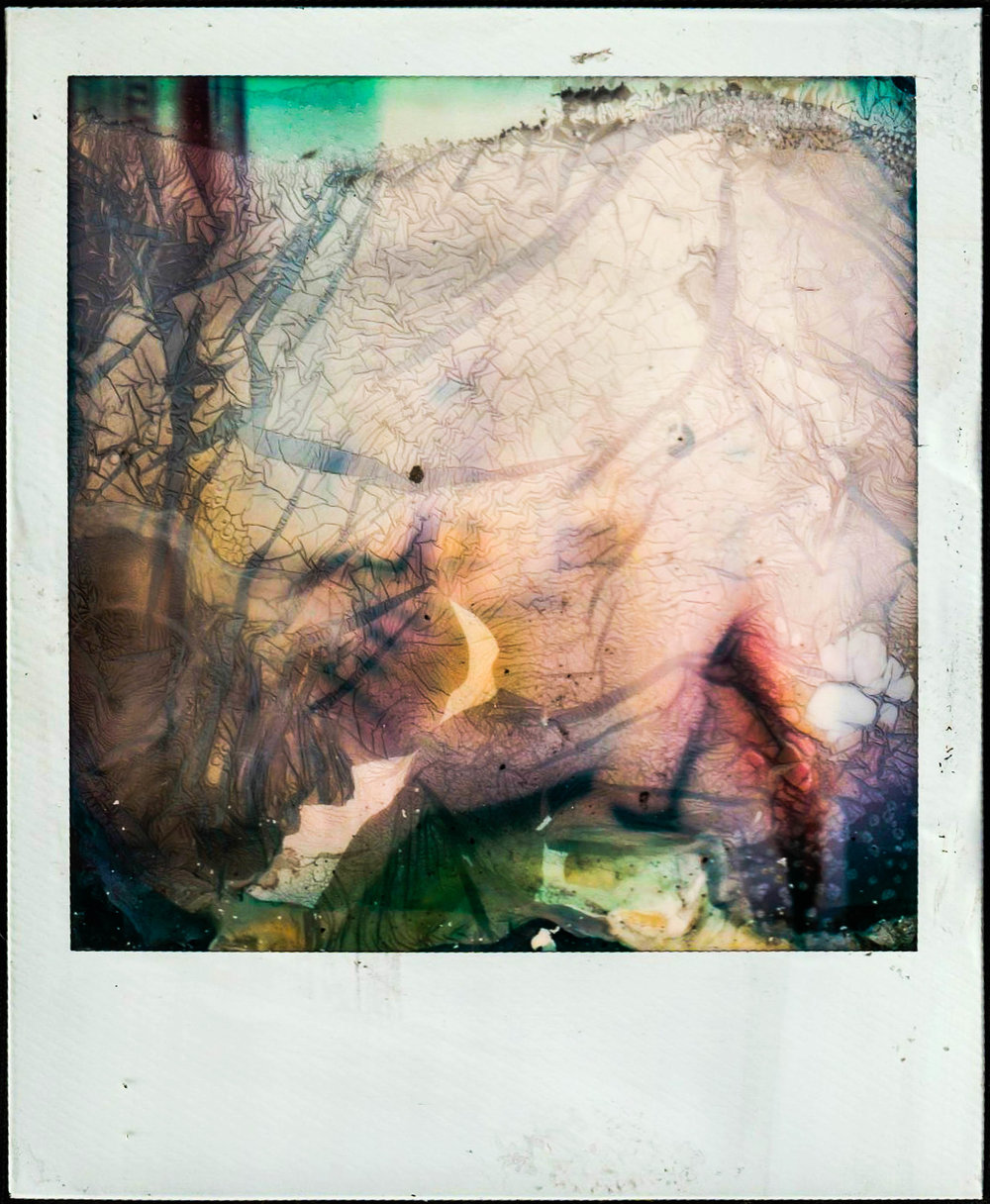 polaroid12b copy.jpg