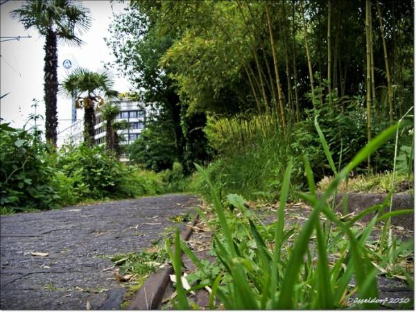 """Заросли в центре Дюссельдорфа образовались при помощи одной """"ландшафтной художницы"""" - Титы Гизе"""