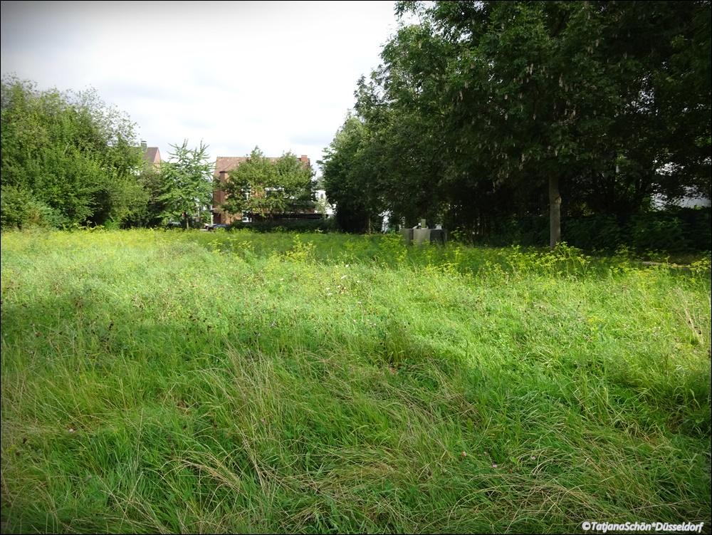 Кто найдёт в траве архитектон (1х1 метр)?