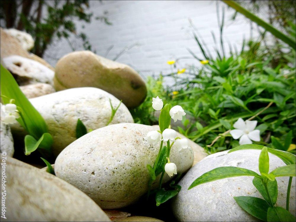 """Вот мои садовые, в """"японский"""" наш фонтан внедряющиеся. В садике много сорняков уже..."""