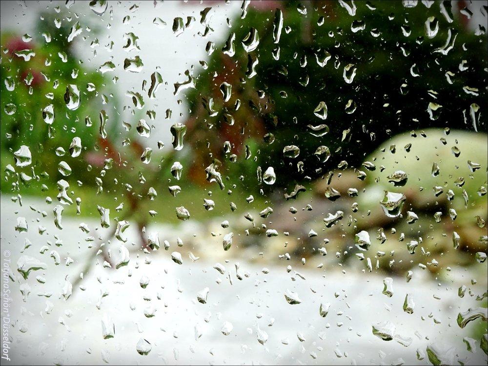 """Дождь за окном и взгляд в сад - в такую погоду хорошодома и можно отредактироватьдавнишнюю запись о """"садиках"""" Карла В. А он хозяин был хоть куда!"""