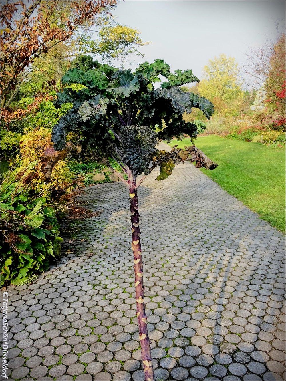 Нет, это не пальма, это капуста :-)