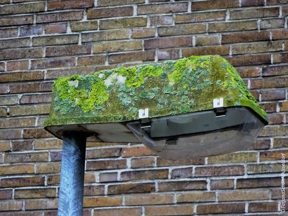 Фонарь у школьной стены порос лишайником