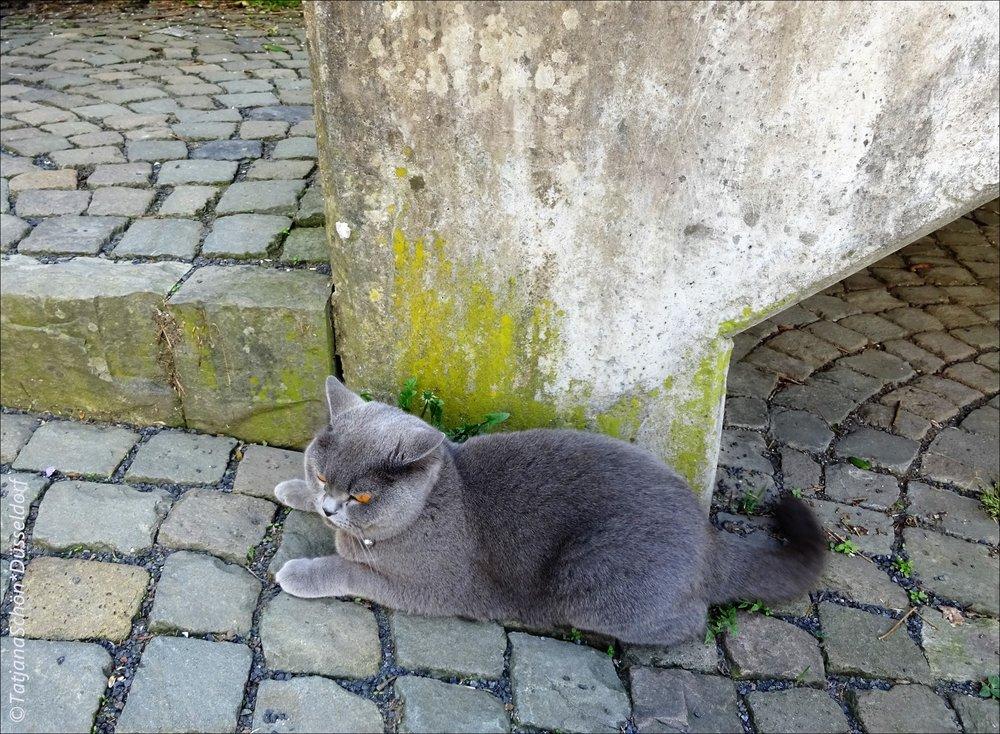 Серый кот в сером уголке Зигена