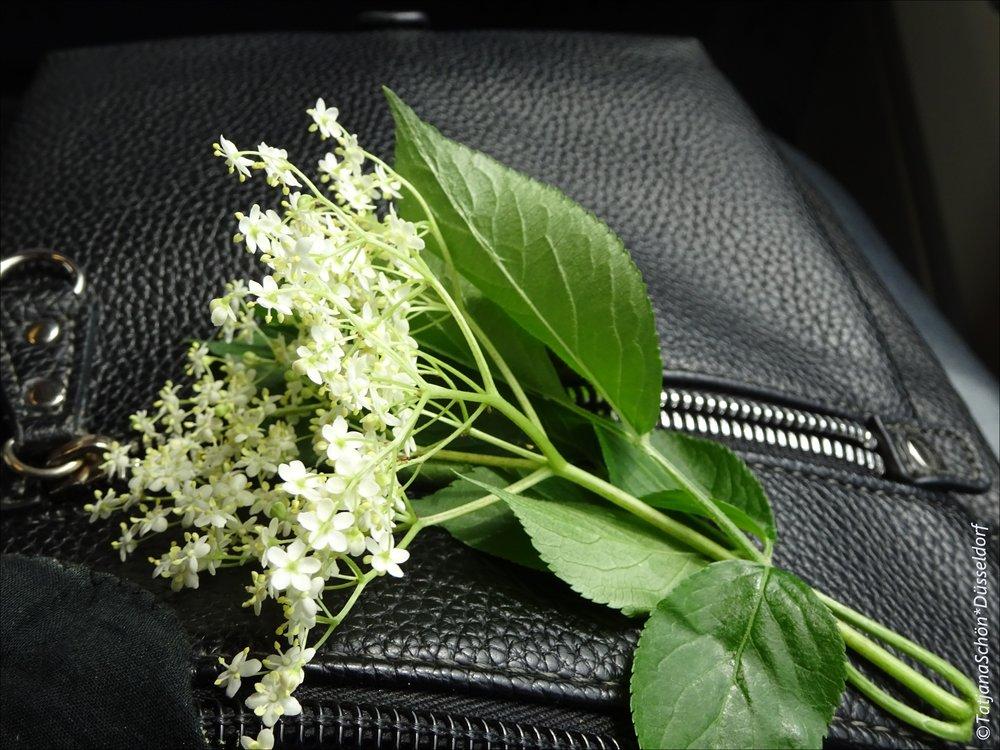 """когда бузина осыпалась, весь асфаль был """"в цветочек"""""""