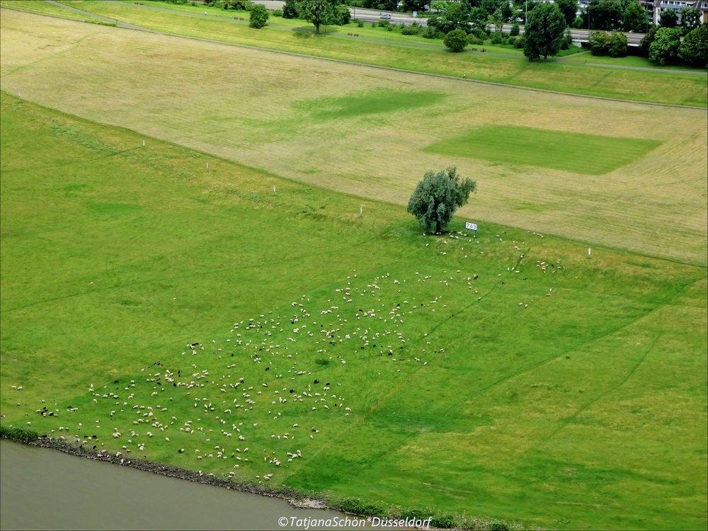 Деревенский пейзаж на рейнском берегу (вид с телебашни)