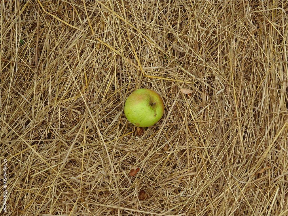 Там есть приличных объёмов яблонево-грушевый сад.