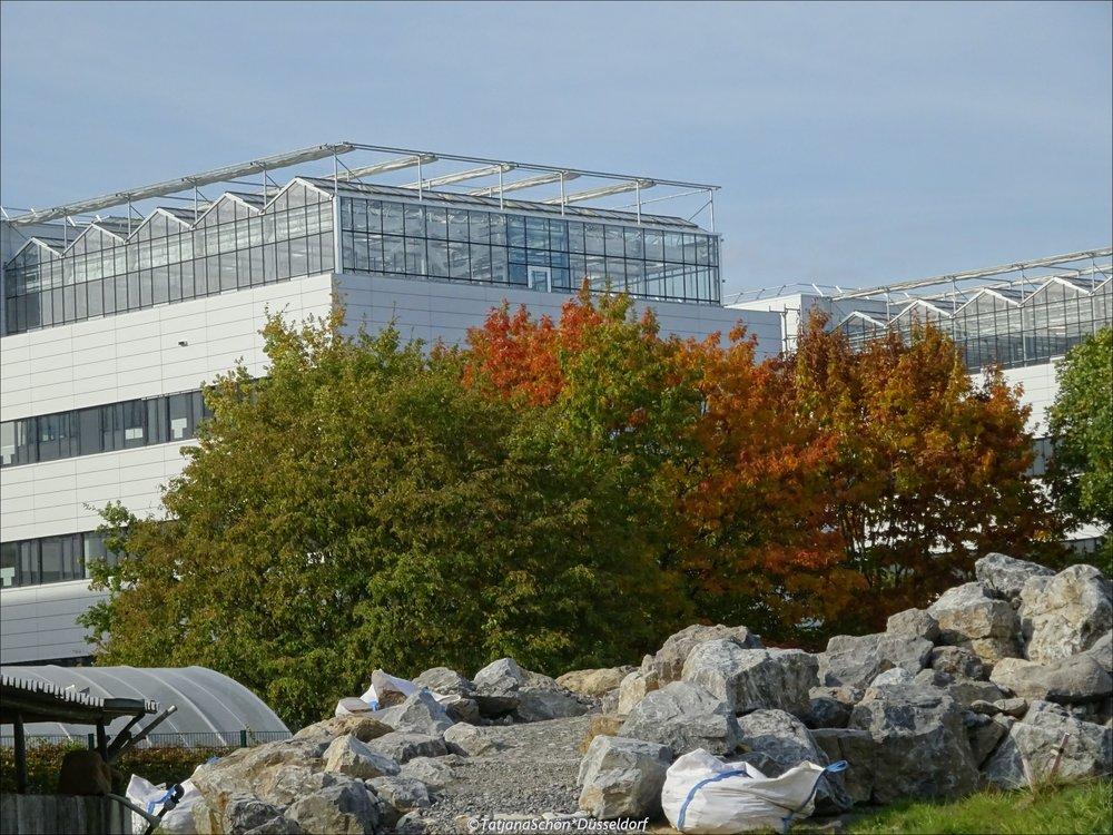 2008-10-51.JPG