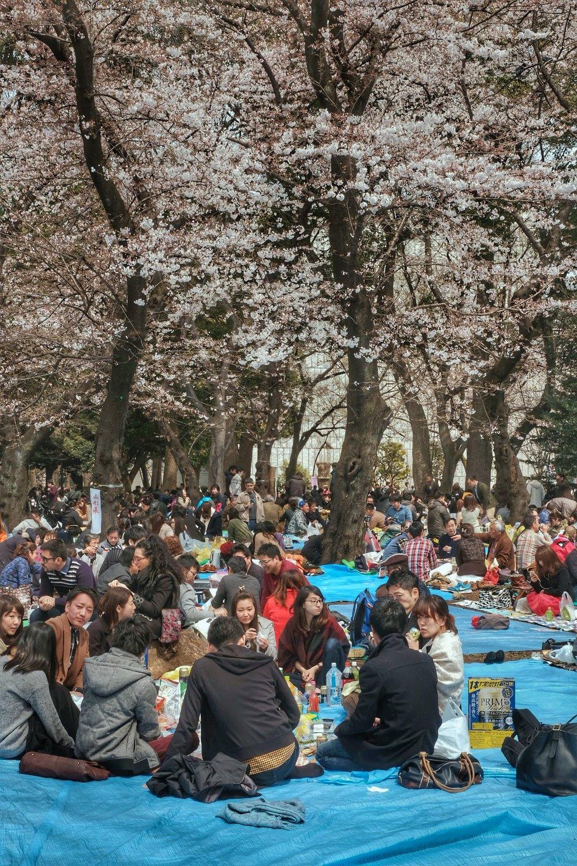 Hanimi in Ueno park.