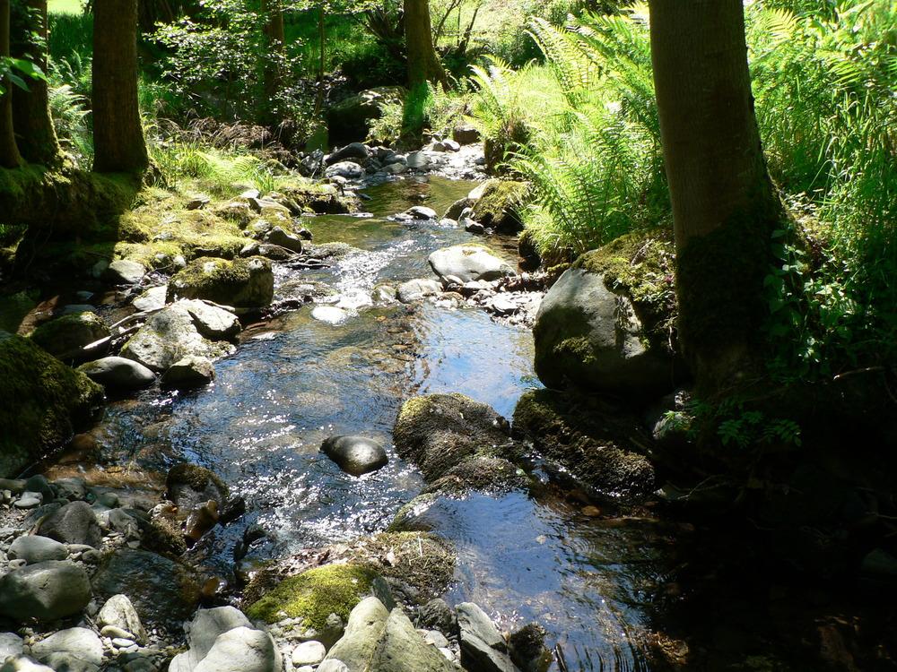 stream quiet 0509.jpg