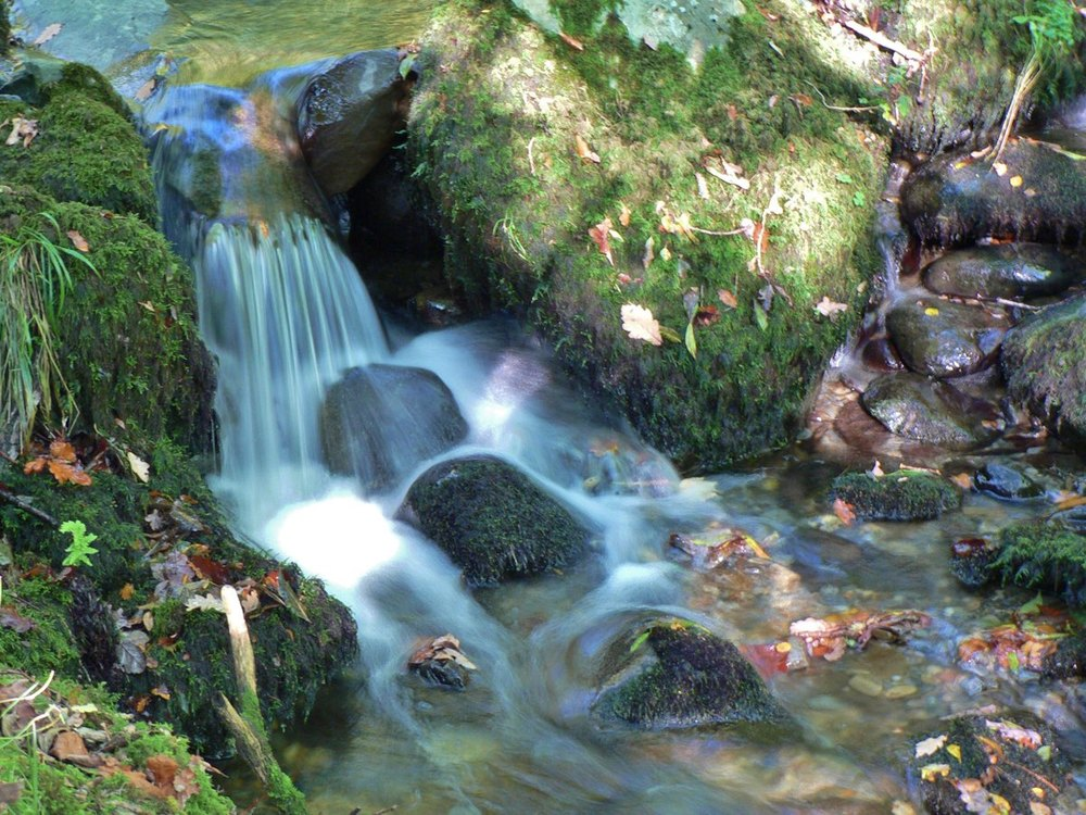 stream leaves 0710.jpg