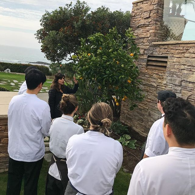 Fulfilling dreams as I work with the  @studiomontage in growing and cultivating a culinary garden for the restaurant. I was so excited to showcase the newly planted garden to the Studio culinary staff and to collaborate with such innovative and creative minds!  #montagelagunabeach #organicgardening #culinarygardening #gardentoplate #ediblegarden #restaurantgarden #gardenrestaurant #chefgarden