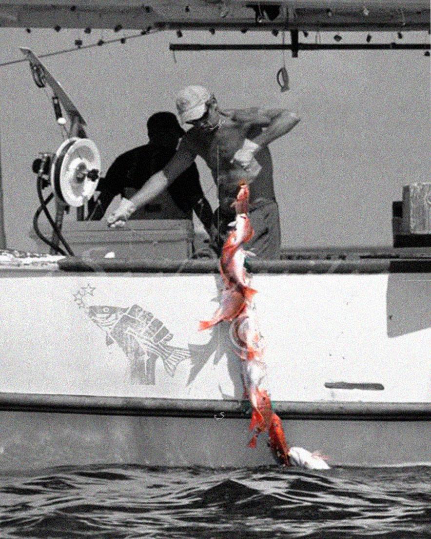 1st Hand_Pulling Fish Onto Boat.jpg