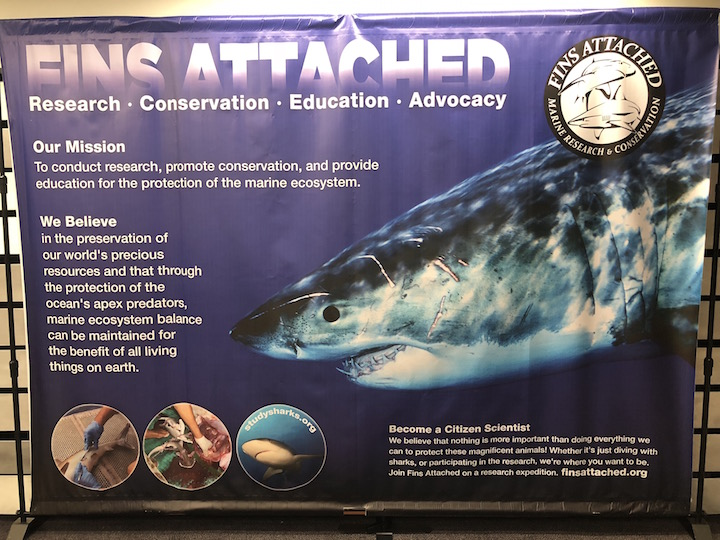 FINS Attached Research Conservation Education Advocacy