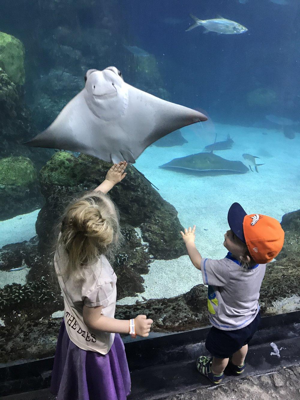 Children Ocean Conservation Manta Ray