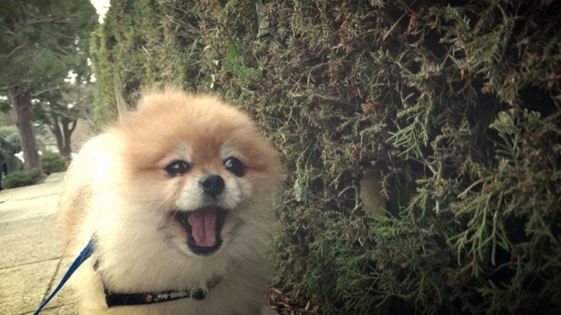 Individual leash walks for older or reactive dogs in Oakland and Berkeley.