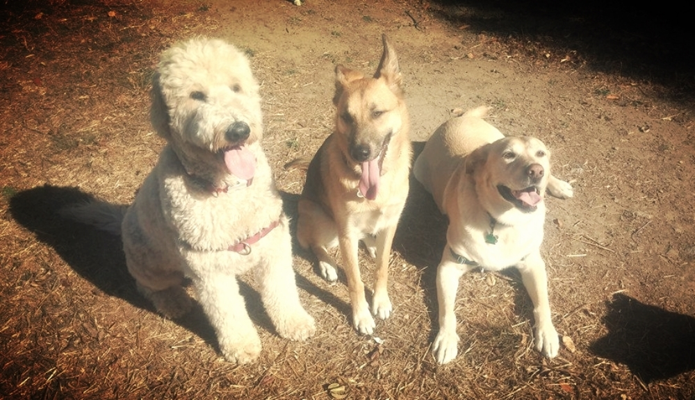 Best group dog hiker in Oakland and Berkeley.